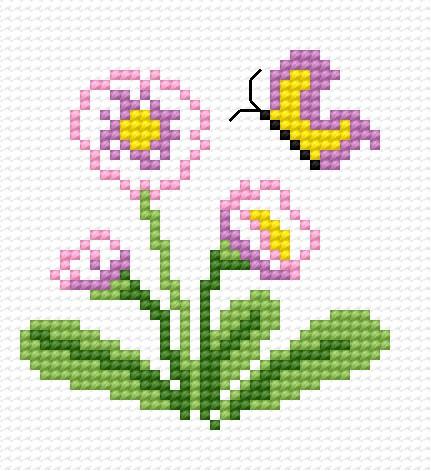 Daisy plants